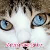 猫のダイクロイックアイの確率や原因は?視力はどうなってる?