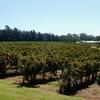 パース近郊スワンバレーでワイナリー・ブリュワリー巡りの旅 ~ブドウ畑で美味しいワインを飲もう~