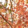 鍋足山へ 紅葉の頂きへ
