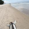 ホアヒンのビーチで乗馬アクティビティ