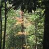 勝俣部長の「高尾登山と健康体質作り」749・・・・転ぶと ヤバイ