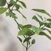 【家庭菜園】2021年の目標 果樹を育てたい