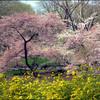 花盛りの春