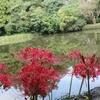 【季節の花】 彼岸花のビュープレイスIN伊勢①