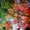 【修善寺】ほっこり紅葉の旅に行ってきました。【もみじまつり】