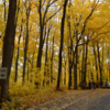 【アメリカ紅葉ドライブ】ウィスコンシン州のデビルスレイク州立公園