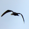 彩湖の鑑賞池で出会った野鳥