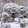 雪の朝 今日は冬籠り 母とのエピソードも少し