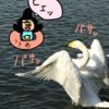 白鳥達の新生活!? 3月10日の収支発表!