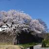 桜咲く鶴丸倉庫