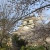 【60年ぶりの展示リニューアル】続100名城 石垣が美しい浜松城と桜