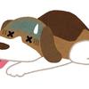 犬の熱中症対策グッズ(屋外・屋内)