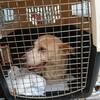 バケボラ(パケボラ) 犬を運びました。