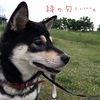 生後359日目 緑の多摩川散歩