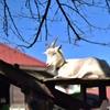 🦋那須 りんどう湖ファミリー牧場で遊んできました♪🐄