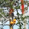 【神戸/イベント】メリケンパーク のクリスマスツリーの植樹の様子と点灯を見てきました