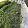 90リットル袋で5袋分の雑草を刈る