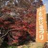 11月下旬でもまだ間に合う!高尾山紅葉&高尾山温泉