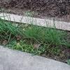 家庭菜園20141023