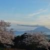 城山公園(桜と桜島を眺める)