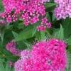 紅紫色 初夏の花がなぜ今・・・