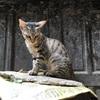 カトマンズでアサンチョークを探検しに行ったら猫に出会った(世界の猫65匹目)