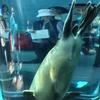 北海道に行ってみた。行動展示に感動。旭山動物園〜四季彩の丘〜ホテル(北海道旅行、二日目)