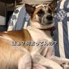 【保護犬の気持ち】普通の犬より複雑で繊細