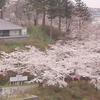 由利本荘「春の花巡り」本荘「さくらまつり編」②(全5回)