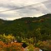 循環する木の物語。来年は東京でも!(^^)