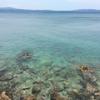 私の大好きな沖縄「やんばる」