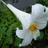 6月21日誕生日の花と花言葉句