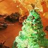 【イベント】1年のイベントーーそして、クリスマスってなに?お祝いのやり方は?ケーキやクリスマス曲を調べてみる