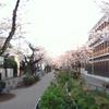 桜は見頃 Part 2