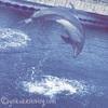 【鹿児島旅行記】vol.2いおワールドかごしま水族館でダイナミックなイルカウォッチング!