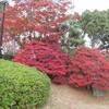 相楽園へ紅葉を見に行く(神戸)…過去20161129