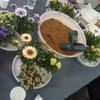 エディブルフラワー 食べるお花を育てよう ~ 緑の市民講座に参加しました!
