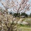 我が庭の花達~花咲かじぃさんとばぁさんの庭 花と指~その拾弐