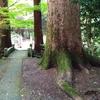 【石瀬神社】エネルギーあるもみの木 ~ちょこっと料理