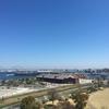 横浜市 みなとみらいと大岡川の桜