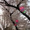 折口信夫の生誕の地、鴎町(かもめまち)公園の桜を眺めてきたよ!【大阪市浪速区】