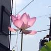 燃える夏っす極天国的なハスの #花 とか書いて写真アップしたら♡♡♡♡マークが飛んできた
