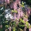 山の緑と紫色の香り