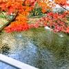 豊島園で発見!赤ちゃんとお散歩自然散策にぴったりの向山庭園♩超穴場でお花見、紅葉狩り!無料ひなまつりフォトスポットも☆