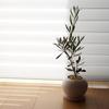 観葉植物生活をスタート