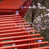 鳥居と桜 - 稲荷山公園