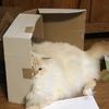 シーフードレストランへ:箱に入った、と思った猫