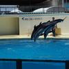 全力で満喫!とにかく満足&充実の水族館「伊豆・三津シーパラダイス」