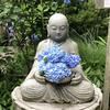 【鎌倉いいね】鎌倉も温暖化?!今年は紫陽花もが早いらしい。