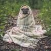 日本人を感知できる犬⁈公園でのエピソード【イギリス生活英語日記】